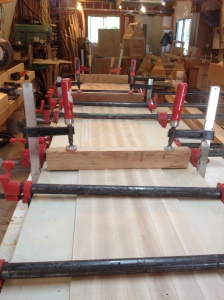Maple counter glue up